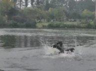 狗狗:在岸上只剩下一个鸭脖子而已