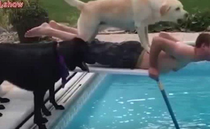 生活中有狗狗作伴才会更有乐趣
