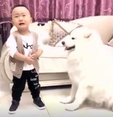 小主人和狗狗太有爱了,成为彼此的小伙伴很开心
