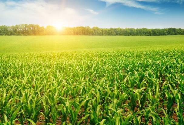 河北7个国家农业科技园区通过验收