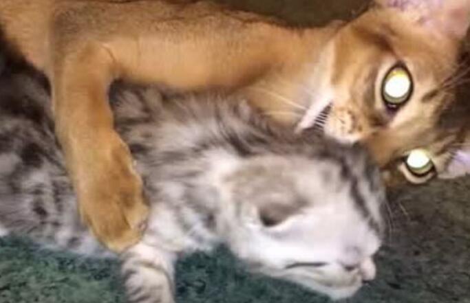 每只小奶猫成长的必经之路!被蹂躏的生无可恋