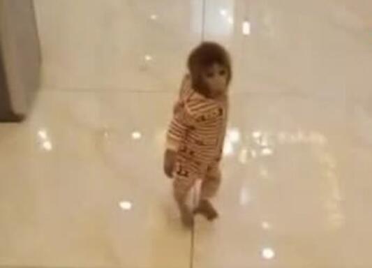 家里有只猴子简直太呆萌了