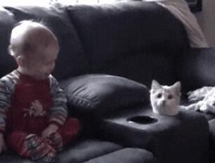 这就叫做藏猫猫