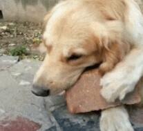 刚过完双十一的狗狗好可怜