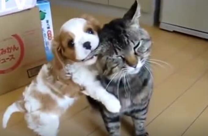 狗狗黏猫咪的样子简直是你的日常女友!