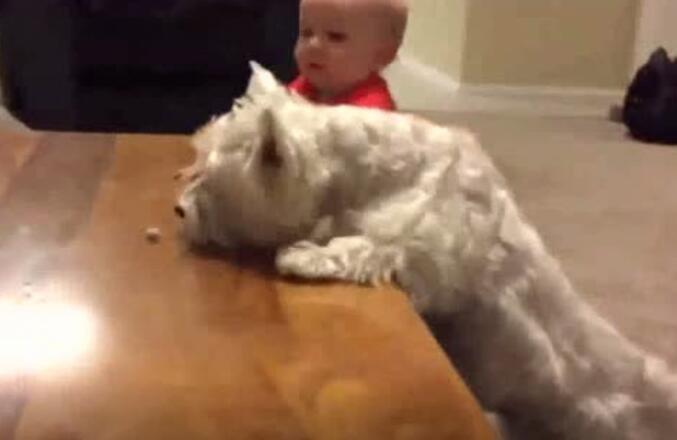 狗狗和小主人的默契度就是这样培养起来的!