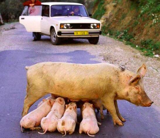 因动物上路,导致交通堵塞的搞笑场景!