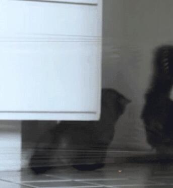 一只不看路的猫