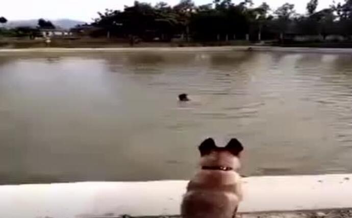 主人溺水狗子勇敢救人,太感人了