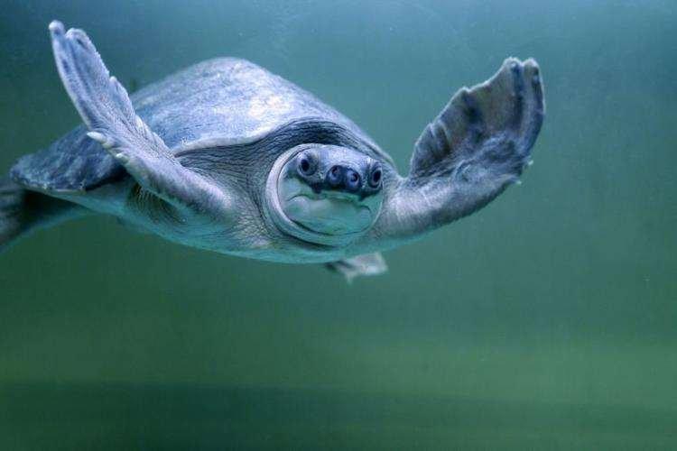 高人的呼吸像乌龟一样!
