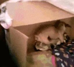 被偷拍了,害羞的狗子