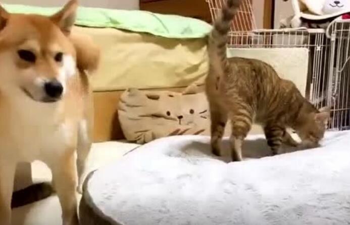 当孤猫和寡狗在一起的时候