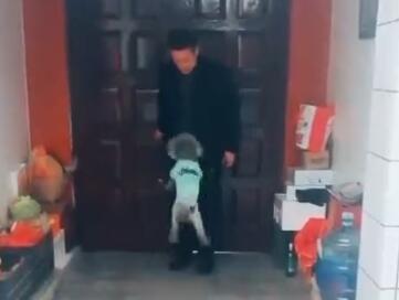 主人开门的前一秒,狗狗都在做什么呢?