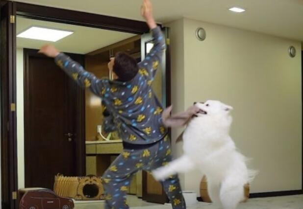 这也太搞笑了吧,主人和猫的关系遭遇滑铁卢