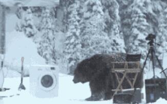 假如动物会洗衣服
