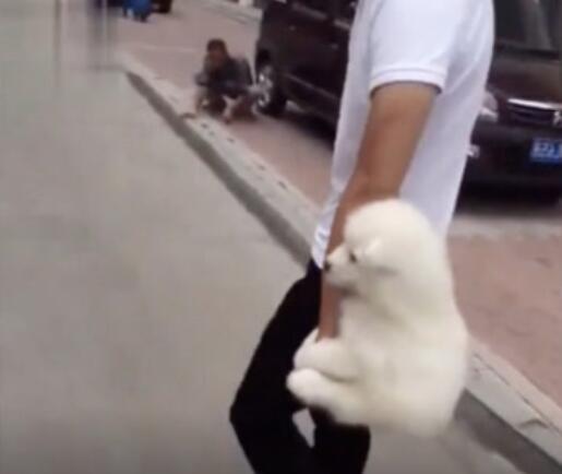 你们喜欢粘人的狗狗吗?