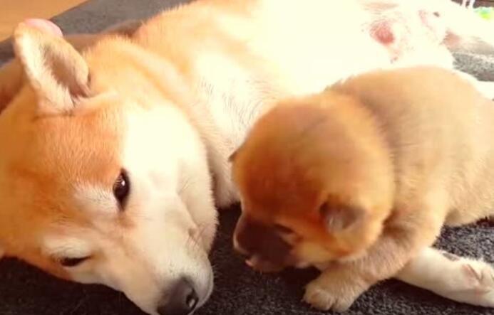 家里这么多狗狗,看起来可太和谐了
