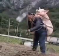 猪肉涨价了,怕丢怎么办?
