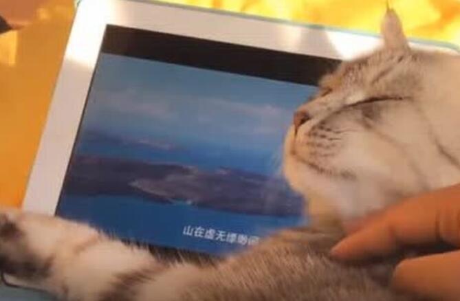 猫咪坐着看电视,最后竟抱着屏幕不撒手!