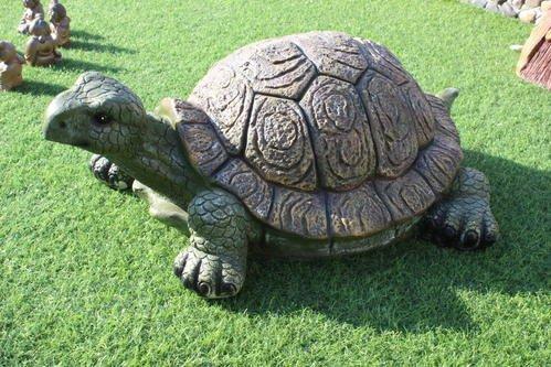 """乌龟背刻""""千年神龟"""""""