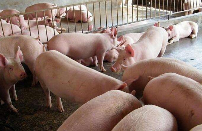 (手机赚钱)猪肉价格一个月每公斤涨近7元突然上涨原因,猪肉价格之后走势如何