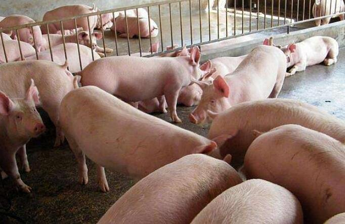 猪肉价格一个月每公斤涨近7元突然上涨原因,猪肉价格之后走势如何