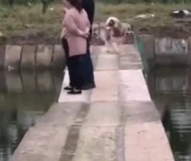 狗子你学的惟妙惟肖