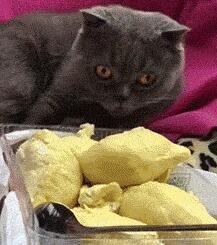 榴莲对于猫咪简直是死亡食物