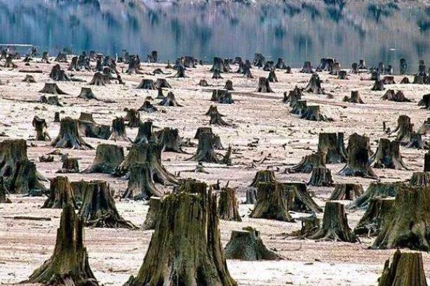 树木砍伐.png