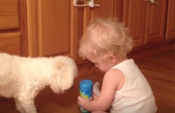 原来狗狗也会带小孩
