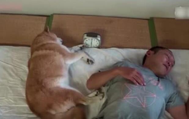 狗狗学会了怎么关闹钟,成精了!
