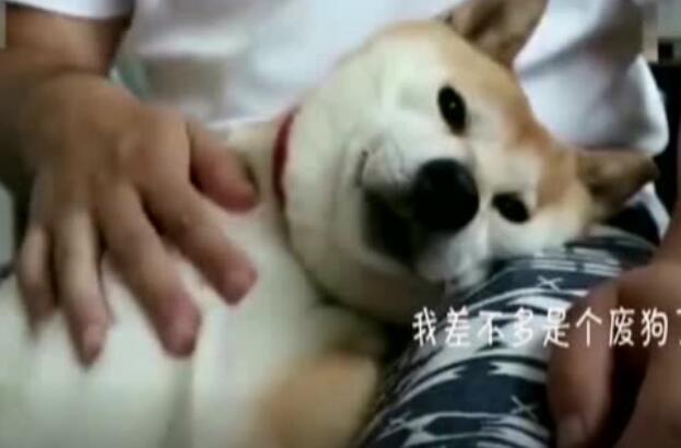 狗狗的戏太足了,请问是表演毕业的吗?