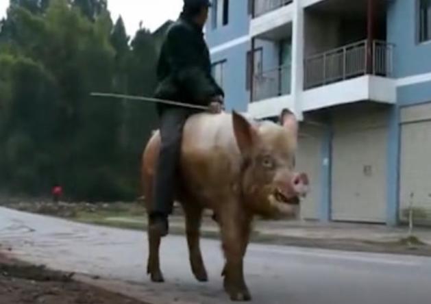 7旬老汉不一般,喜欢骑猪逛街,猪也超级配合!