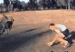 动物耍流氓找谁主持公道