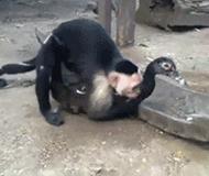 放开那只鹅