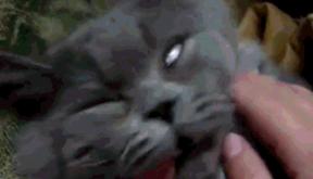 你永远喊不醒装睡的猫