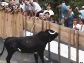 千万不要和动物正面刚