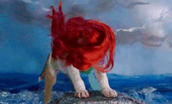 红色毛发的狮子
