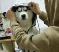 狗子没报复吧?