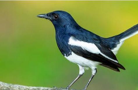40种鸟的名字