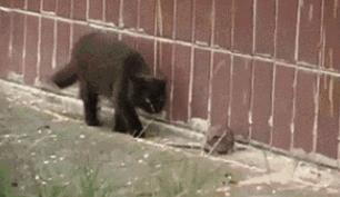 这样的猫只能用来宠爱
