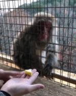 看戏的猴子惊呆了!!