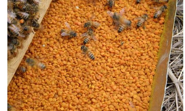 花粉的功效与作用