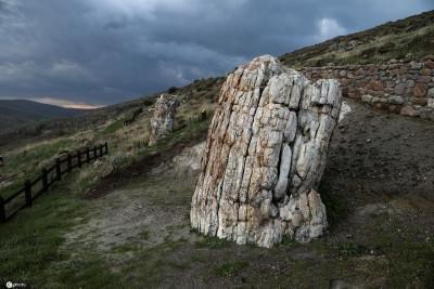 希腊发现2000万年前化石树,树枝保存完整!