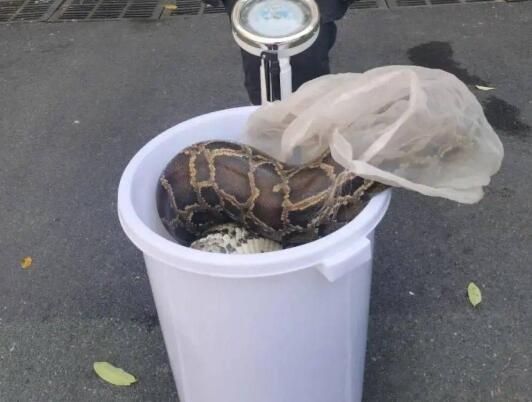 蟒蛇.jpg