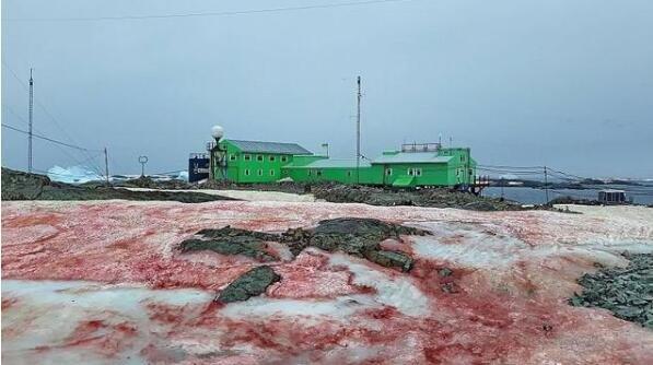 """警惕!南极出现西瓜雪 粉红色的""""西瓜雪""""很危险!"""