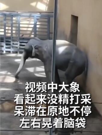 太原动物园大象摇头数月疑抑郁,园方回应!网友:去年好像就这样