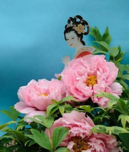 牡丹仙子的传说讲的什么故事?牡丹仙子的传说的结局是什么?