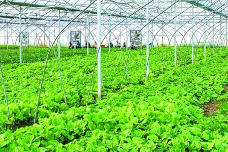 农产品市场分析介绍及农产品市场分析要点