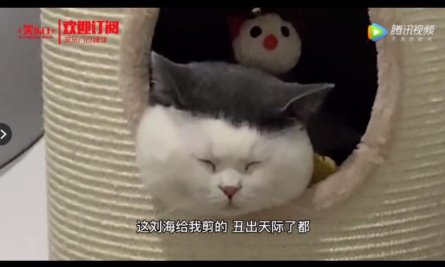 猫:天下托尼一般黑 这刘海给我剪的 跟汤圆煮出馅了似的